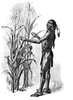 Original title:    Description English: How Well The Corn Prospered. Squanto or Tisquantum demonstrating corn he had fertilized by planting with fish. Date 1911(1911) Source Bricker, Garland Armor. The Teaching of Agriculture in the High School. New York: Macmillan, 1911. Page 112. Author The German Kali Works, New York Permission (Reusing this file) Public domain in USA.