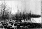 Original title:  Photograph Mosquito Swamp, copied about 1900 David Pearce Penhallow About 1900, 19th century or 20th century Silver salts on glass - Gelatin dry plate process 12 x 17 cm MP-0000.117.11 © McCord Museum Keywords:  Photograph (77678) , Waterscape (2986)