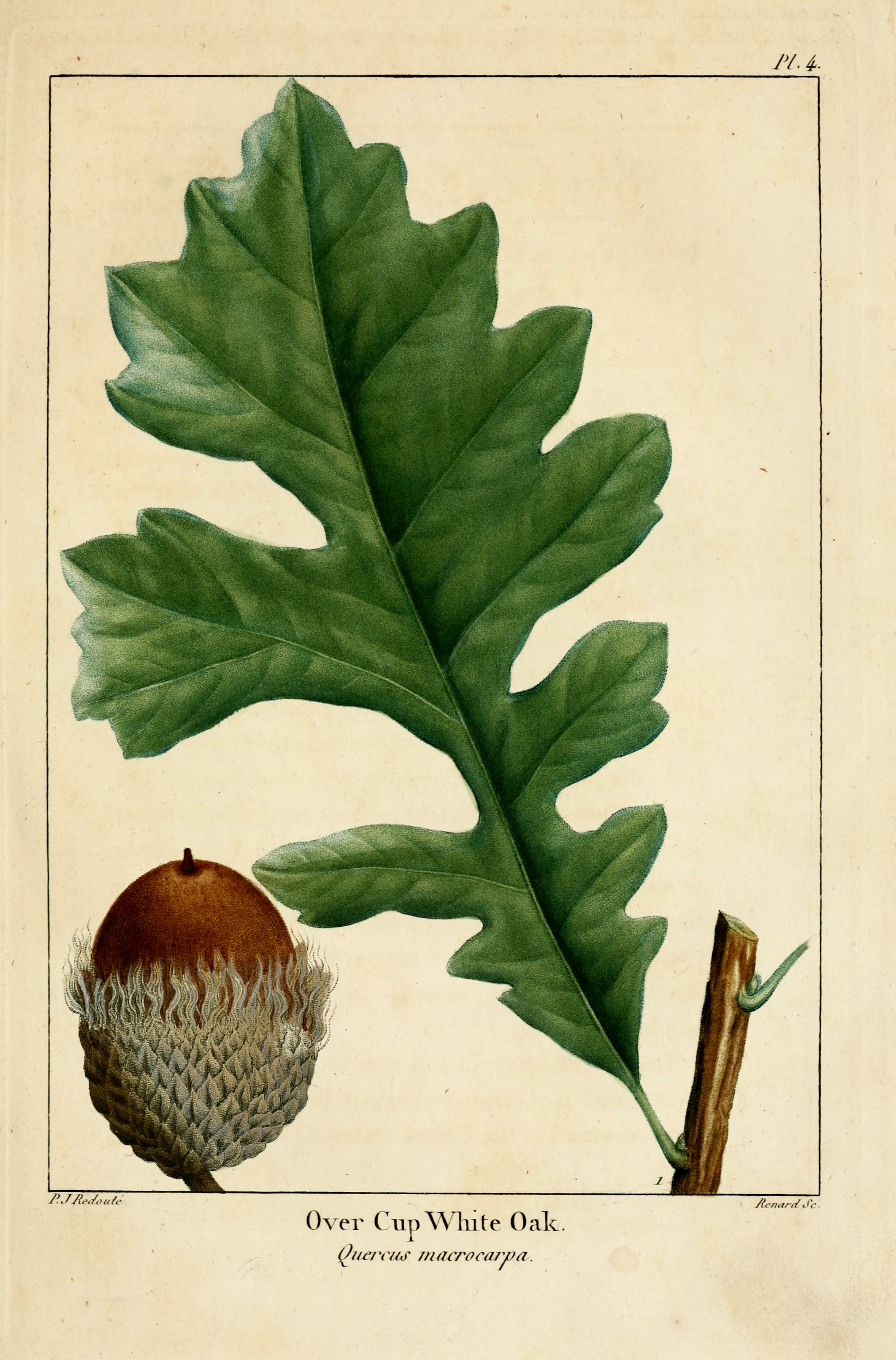 Exemple d herbier original trendy fig plate uclastra filix masud thomas moore with exemple d - Exemple d herbier original ...